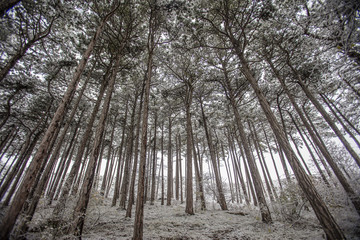 winter in forest background