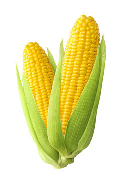 Sweet corn ears isolated on white background