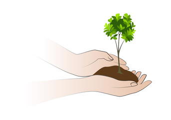 Hands holding plant isolated on white background. The concept of ecology, environmental protection, growth. Human hand holding green small tree vector illustration.