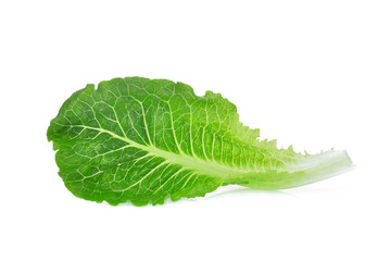 fresh baby cos,lettuce isolated on white background