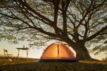 orange camping tent under the tree at sunrise or sunset background