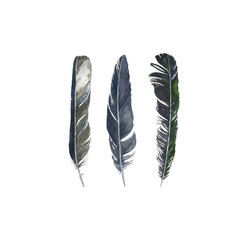 watercolor drawing feathers