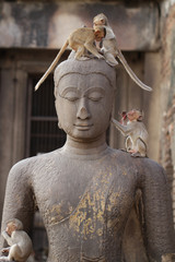 Children Monkey standing playing on ancient Buddha head statue, Candid animal wildlife picture waiting for food, group of mammal on historical travel destination in Asia