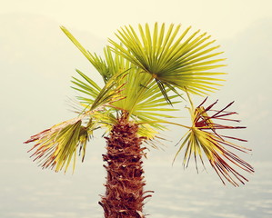 Palm Tree with Sky Background, Tropical, Travel Concept, Summer