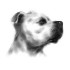 Drawing dog head. Digital illustration