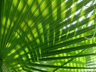 green shine palm leaf Wall mural