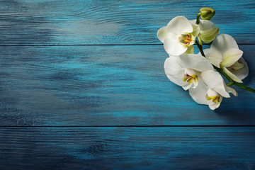 Branch of white Orchid on the  blue wooden background