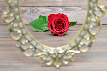 Mothers Day rose and vintage frame