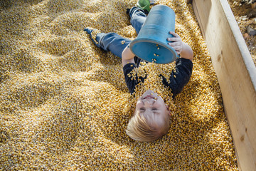 High angle view of boy playing with corns in container at park