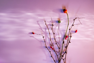 Valentine's day Mother's Day card wedding pink background light reflection dry twigs autumn winter spring love tenderness