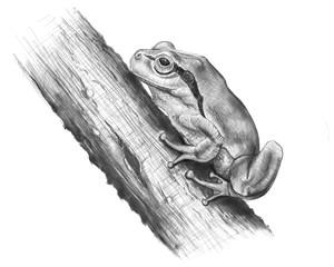 frog tree / digital painting