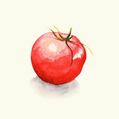 Pomidor- ilustracja ręcznie malowana