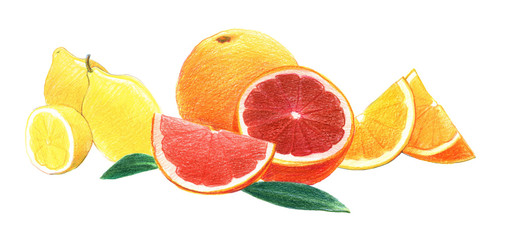 Citrus fruits: lemon, orange and grapefruit in whole and in a cut. Graphic drawing with colored pencils. Isolated on white background
