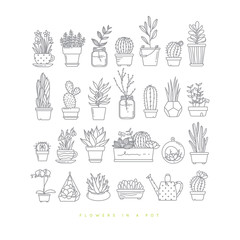 Icon plants in pots