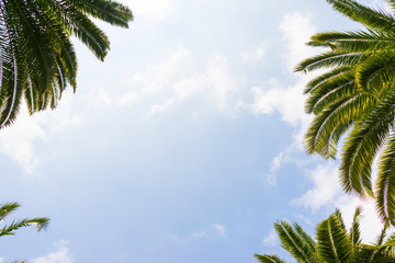 Palm trees against blue sky, Palm trees at tropical coast, coconut tree,summer tree