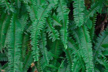 Green leaf wall,green leaves background