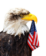 The Bald Eagle holds in the beak of the United States Flag isolated on a white background.