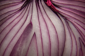 abstract macro close-up of red onion lines Wall mural