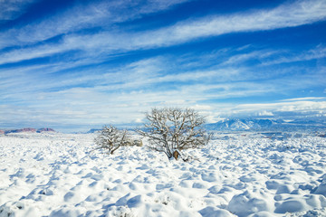 Trees with Snow and Blue Sky with Mountain in the Background