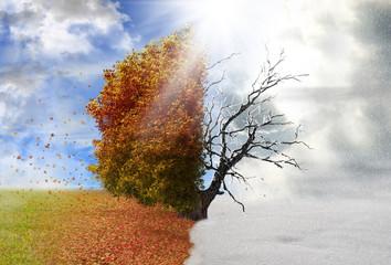 Autumn and winter season tree, concept