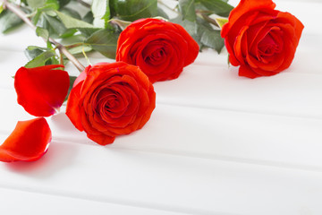 red roses on white wooden planks background