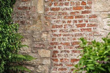 old brick wall texture with plant
