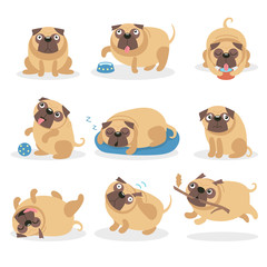 Cute funny pug dog set, dog in different poses and situations cartoon vector Illustrations