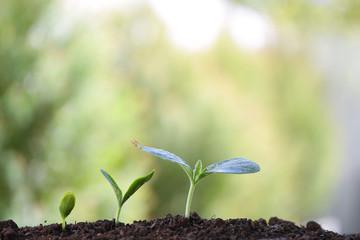 Green plants planting