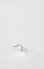 冬 枯草 雪 素材