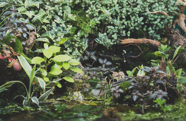 Beautiful freshwater green aquarium with plants.