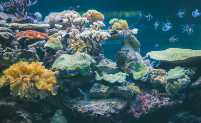 Corals and fish in the depths of the sea.