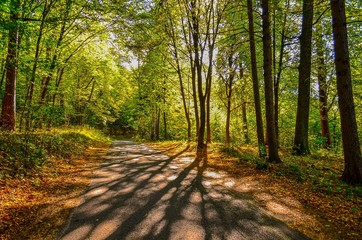 Photo Stands Road in forest droga