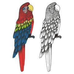 A parrot. Hand drawing. Vector illustration
