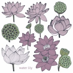 Water lily. Set of vector illustrations