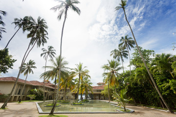Sri Lanka - Ahungalla - Huge palm trees at a resort
