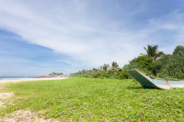 Sri Lanka - Ahungalla - A huge flower meadow at the beach