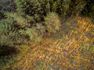 Irish forest from above.