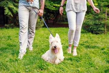 White dog with owners