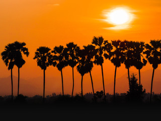 Palm trees during the early morning light.