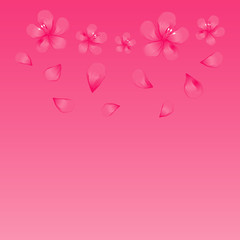 Pink flowers and flying petals isolated on bright Pink background. Apple-tree flowers. Cherry blossom. Vector