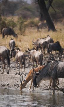 Animals Drinking Water in Tarangire National Park, Tanzania