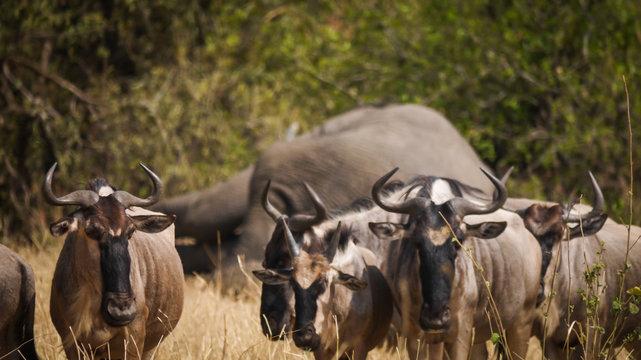 Safari in Tarangire National Park, Tanzania