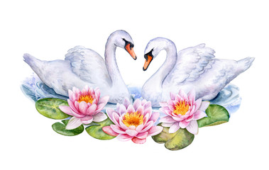 Lotus. Water lilies and white swans isolated on white background. Watercolor. Illustration. Handmade. Card. Invitation