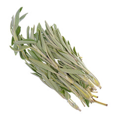 Top view of several organic sage branches isolated on a white background.