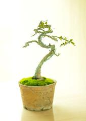 bonsai tree in pot.