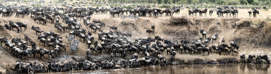 Great Wildebeest Migration Panoramic Scene