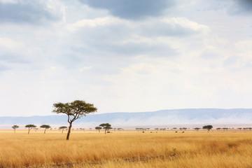 Kenya Open Field With Elephants in Background Wall mural