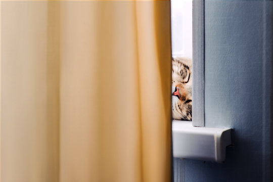 happy cat Maine Coon sleeps on the windowsill and see colorful dreams. dreamy background with the image of purebred kitten. animal pet backdrop funny wallpaper.