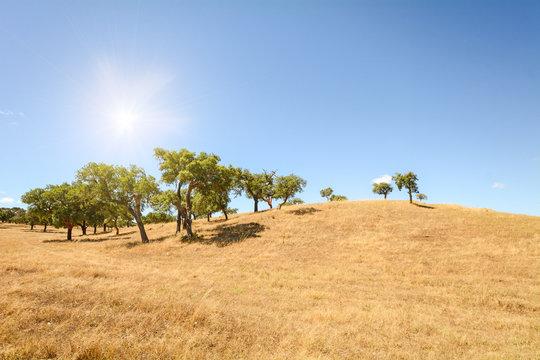 Hügelige Alentejo Landschaft mit Korkeichen Bäumen und gelben Feldern im Spätsommer bei Beja, Portugal Europa
