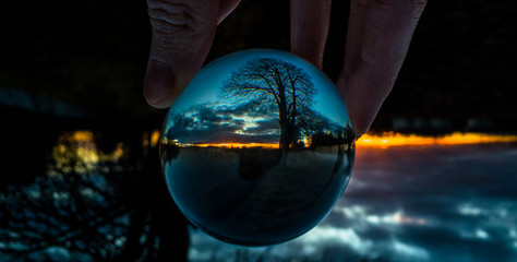 Reflection of tre on crystal ball